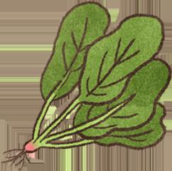 波菜富含葉黃素