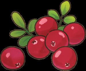 狗吃蔓越莓