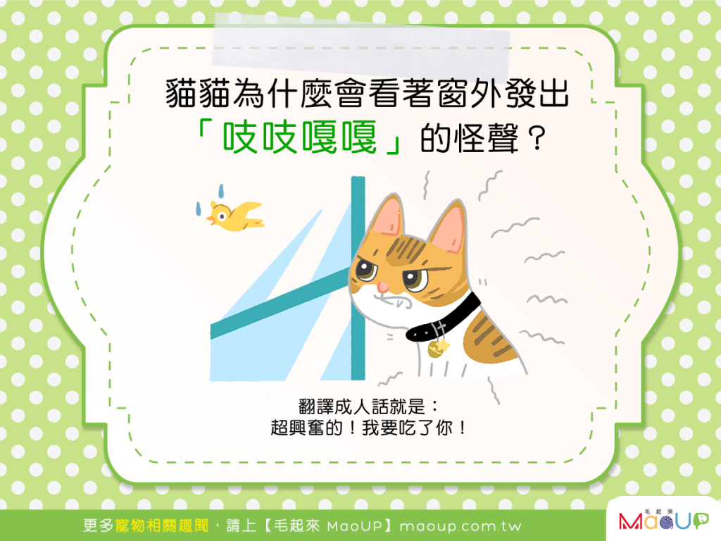 【貓咪行為學】貓貓看著窗外發出怪聲?!是在跟喵星人通訊嗎?
