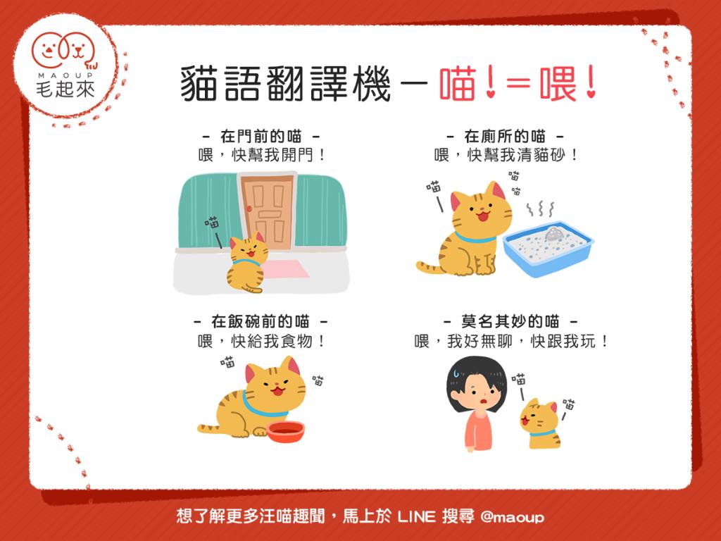 【貓語翻譯機】貓貓總是對你喵喵叫?其實「喵!=喂!」喔~