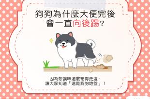 【汪汪行為學】狗狗大便完一直往後踢,是在模仿貓咪埋大便嗎?
