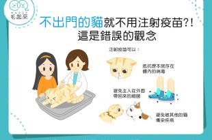 【喵喵康健】細菌病毒有夠多!別再以為「宅貓」不用打疫苗!