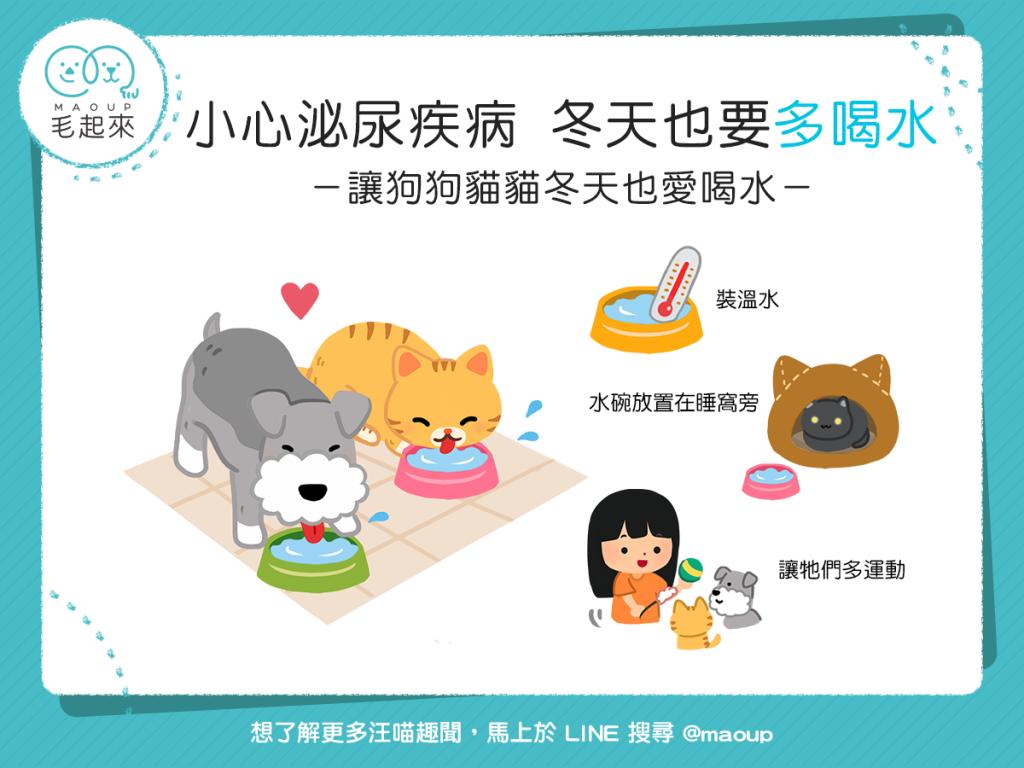 讓狗貓冬天多喝水的3個技巧