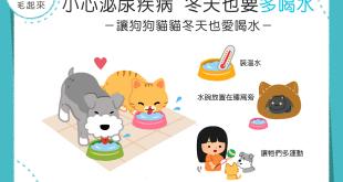 【汪喵餵養知識】小心泌尿疾病!3個小撇步讓汪喵冬天也愛多喝水!