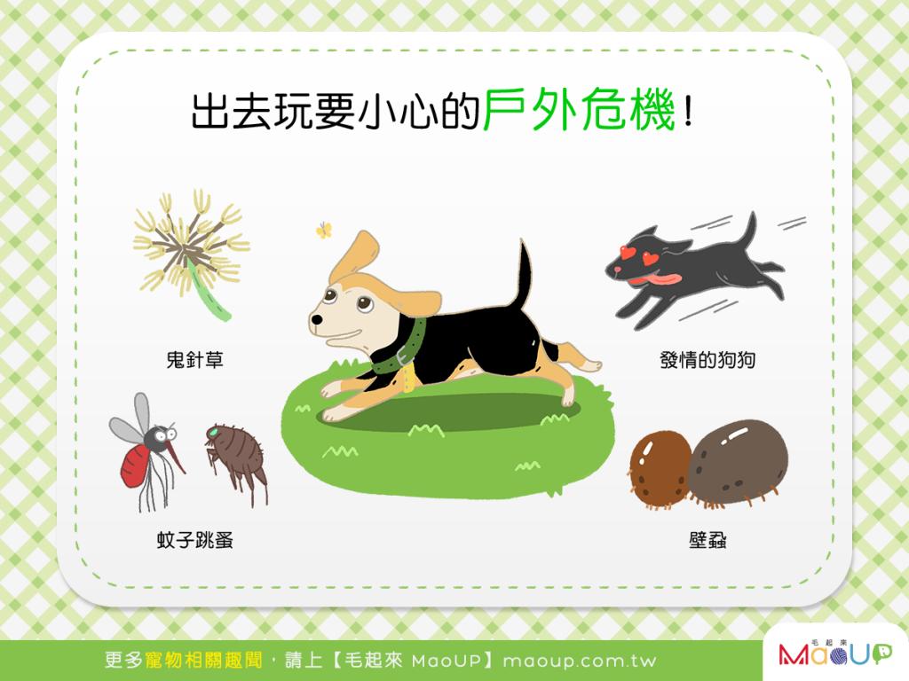 【汪汪出門趣】狗狗開心出去玩~戶外危機要小心!