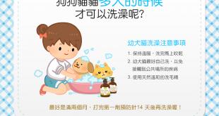 【汪喵洗香澎】狗狗貓貓多大才可以洗澡?又有什麼要注意呢?