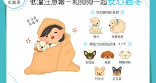 【低溫注意報】冬天好冷!注意保暖,和狗狗一起安心過冬吧!