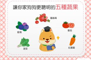 【家有聰明汪】神奇5蔬果,讓狗狗吃了頭腦「頂呱呱」!