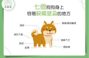 【汪汪康健】狗狗的身體成了壁蝨大本營?!7個位置壁蝨最愛!