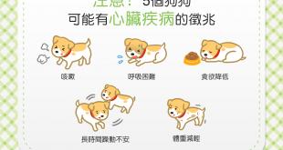 【汪汪康健】以為狗狗只是感冒嗎?當心這5個心臟病徵兆!