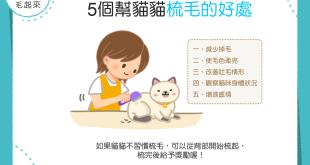 【梳毛好處多】你幫貓貓梳毛了嗎?幫貓貓梳毛的5大好處!