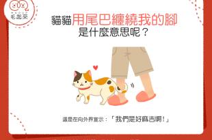 【喵喵真心話】貓貓用尾巴纏繞我的腳!這是什麼意思呢?!