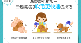 【汪汪洗香澎】狗狗毛好難乾怎麼辦?3個更快速吹毛的技巧!