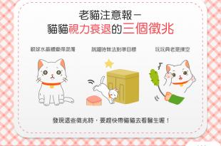 【老貓注意報】貓主子老了嗎?貓貓視力衰退的3個徵兆要注意!