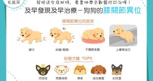 【汪汪康健】及早發現及早治療!狗狗膝關節異位的4大症狀!