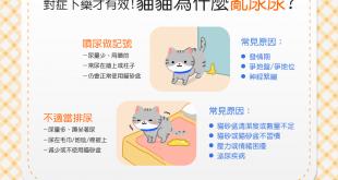 【喵喵訓練術】貓貓又亂尿尿?!對症下藥才知道怎麼避免唷!