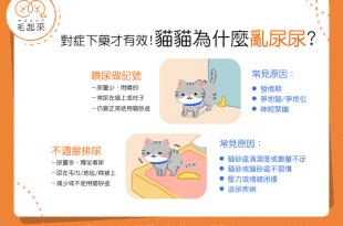 貓咪亂尿尿的原因