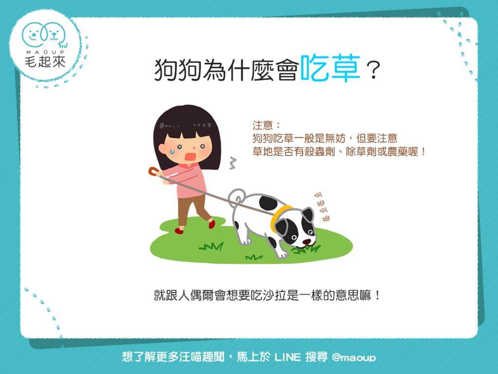【狗狗行為學】蝦密!狗狗為什麼會吃草?!難道狗狗吃素嗎?!