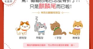 【喵喵知識加】驚!貓貓的尾巴怎麼骨折了?!只是麒麟尾啦!