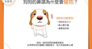 【汪汪康健】咦?!狗狗的鼻頭怎麼褪色了咧?