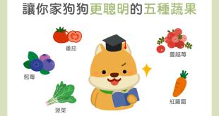 【營養食材圖鑑】神奇5蔬果,讓狗狗吃了頭腦「頂呱呱」