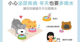 【汪喵疾病飲食】小心泌尿疾病!3個小撇步讓汪喵冬天也愛多喝水!