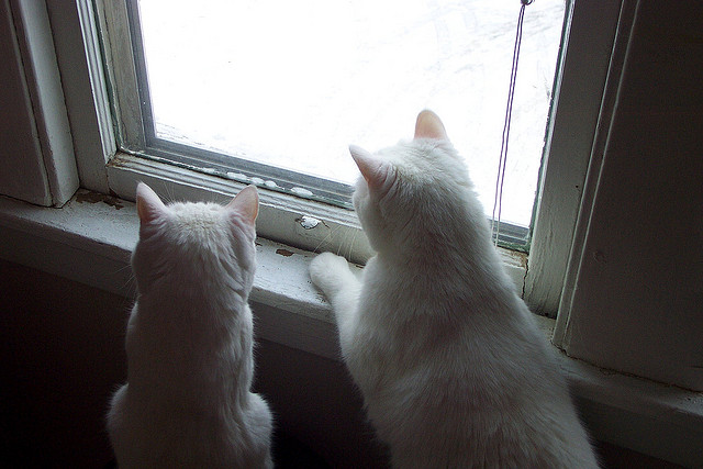 Curiosity and the cats