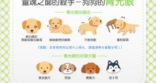【汪汪康健】狗狗眼睛不太好?當心青光眼已經找上狗狗!