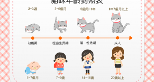【喵喵小知識】貓貓現在是人類的幾歲咧?貓貓的年齡對照表~