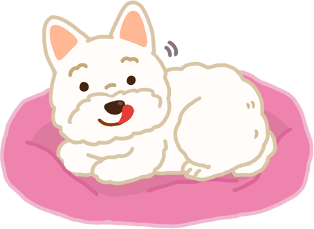 【汪汪真心話】狗狗剛睡醒的時候,為什麼一直舔鼻子咧?