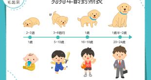 【汪汪小知識】狗狗現在是人類的幾歲咧?狗狗的年齡對照表~