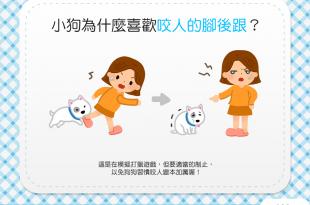 【汪汪行為學】小狗喜歡咬人的腳後跟?!難道腳後跟很好吃?!