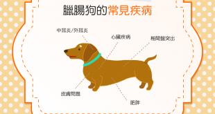 【汪汪康健】臘腸狗飼主注意囉!快來認識臘腸狗的常見疾病!