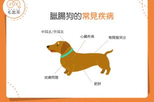 臘腸狗的常見疾病