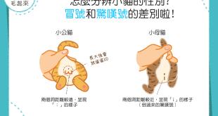 【喵喵性別學問大】小貓性別怎麼分?冒號和驚嘆號的差別啦!