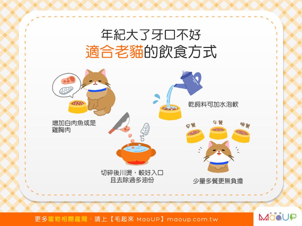 【喵喵呷健康】貓貓老了牙口不好?4種飲食方式讓老貓健康吃!