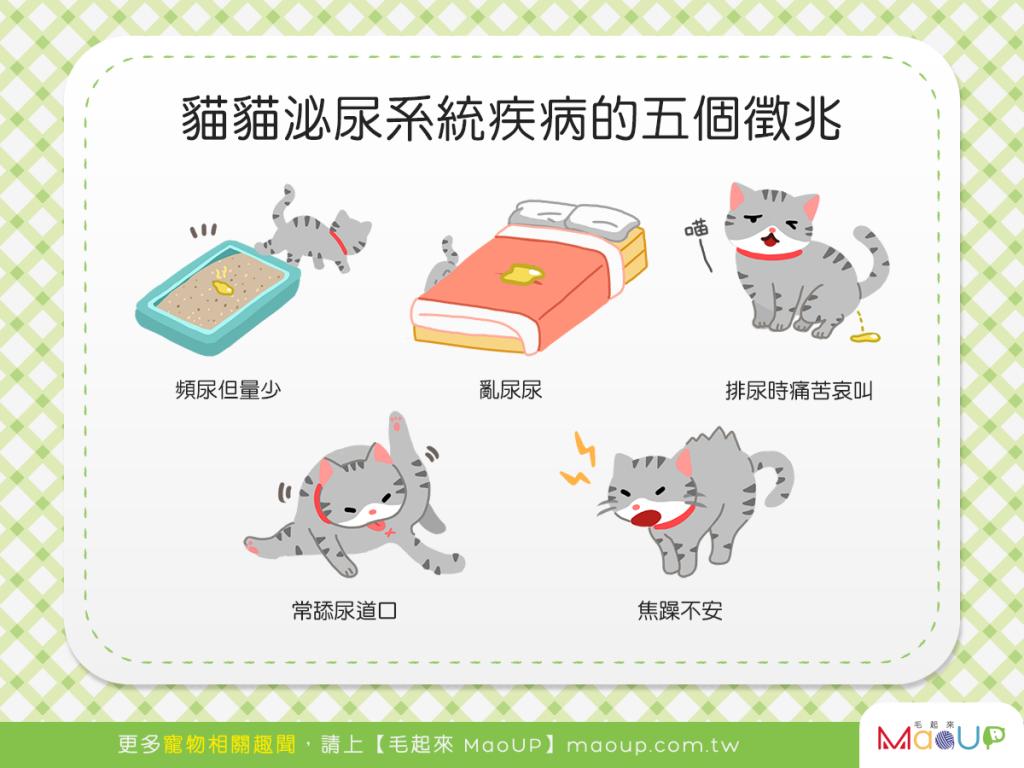 【喵喵康健】貓貓亂尿尿?當心!貓貓可能正為泌尿疾病所苦!