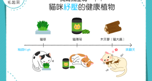 【喵喵fun輕鬆】偶爾減壓嗨一下!這些植物讓貓咪紓壓更健康!