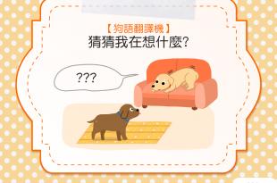 【狗語翻譯機】身體緊繃、眼睛瞪大,狗狗是想說什麼呢?