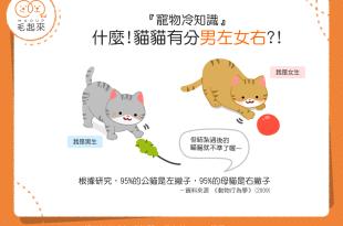 【喵喵冷知識】蝦密?!貓貓也有分「男左女右」?!