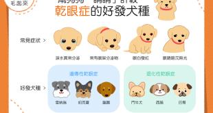 【汪汪康健】狗狗也有乾眼症?這些狗狗還特別容易罹患?!