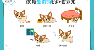 【家有憂鬱狗】狗狗無精打采?當心!這可能是憂鬱症的徵兆!