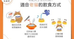 4種老貓飲食方式