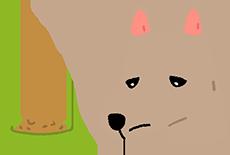 狗狗食慾不振