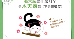 【喵喵小知識】讓貓貓飄飄然的「貓大麻」揪竟是什麼?!