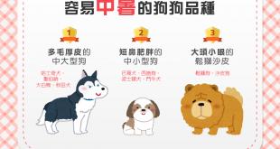 容易中暑的狗狗品種
