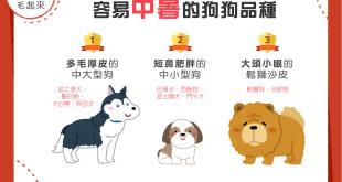 【汪汪康健】夏天散步好開心?當心這3種狗狗有中暑危機!
