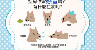【汪汪康健】咦?狗狗也會感冒嗎?有什麼症狀呢?