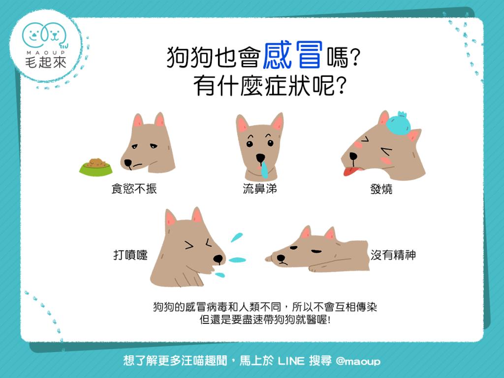 狗狗感冒5大症狀