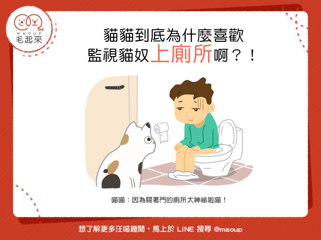 【喵喵行為學】貓貓到底為什麼喜歡監視貓奴上廁所啊?!